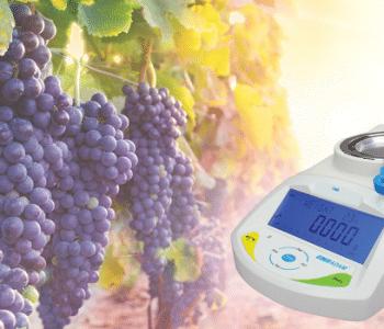 producción de vino, Maximizar el rendimiento de la uva en la producción de vino